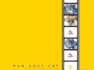 cat photo background